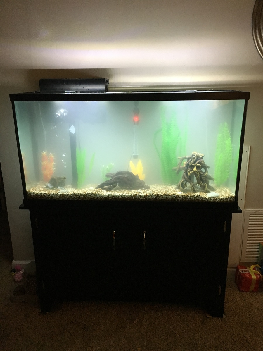 Freshwater fish tank has cloudy water -  But Still Rather Cloudy We Just Filled It About 30 Min Ago Should I Just Give It More Time To Settle Or What Can I Be Doing To Clear This Up Faster