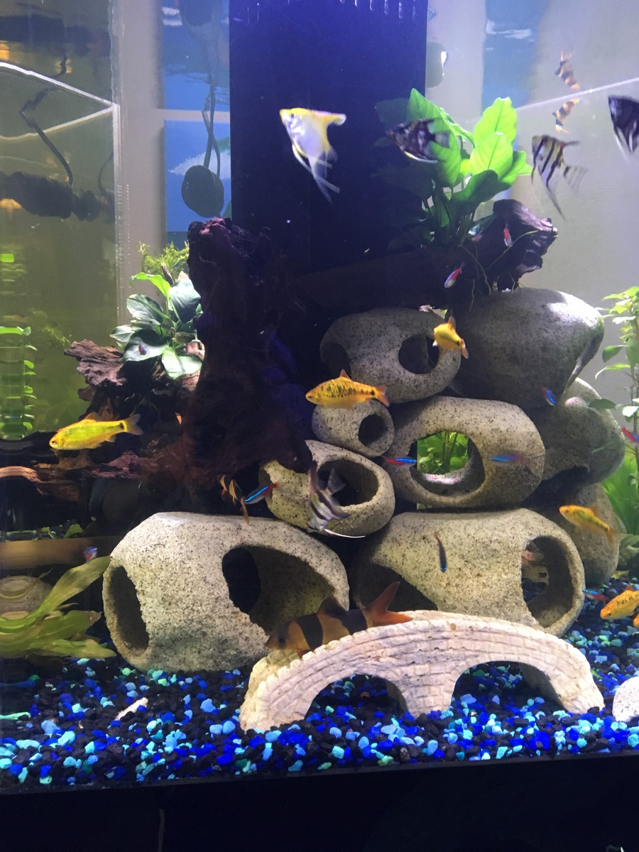 Freshwater aquarium fish that look like sharks - All Schooling Fish School I Would Like To Add Discus But Am Unsure If There S A Great Good Looking Behaving Fish That I M Missing Any Suggestions
