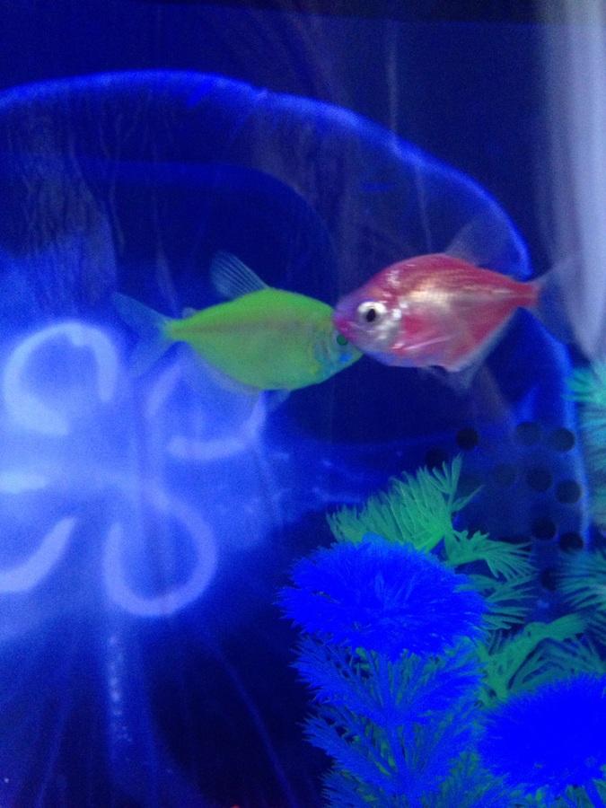 Bottom feeder or no my aquarium club for Bottom feeder aquarium fish