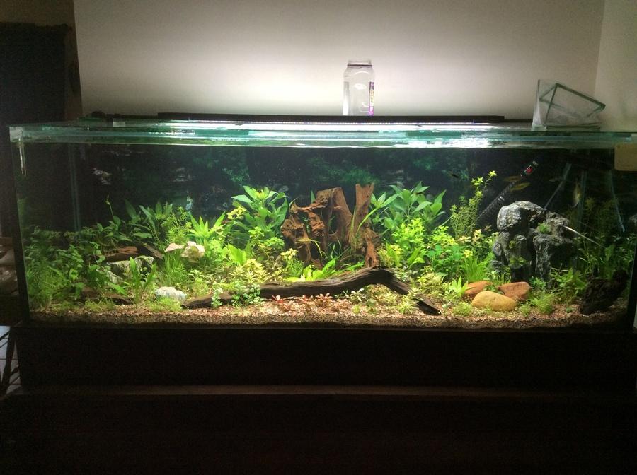 Camallanus worms in 6ft planted tank my aquarium club for 6ft fish tank