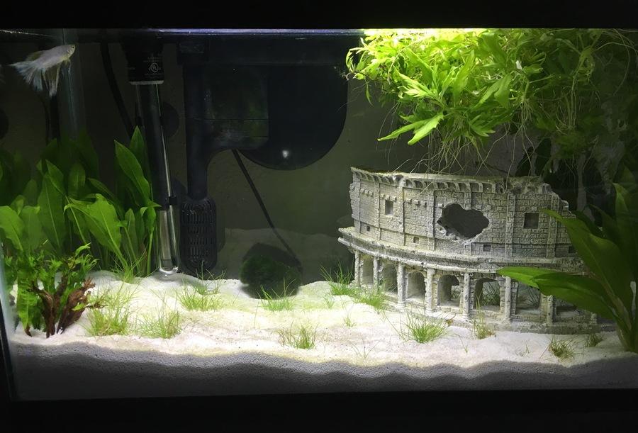 Green Algae In New Tank My Aquarium Club