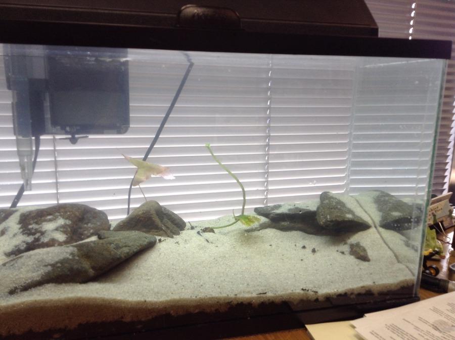 10 gallon stocking ideas my aquarium club for 10 gallon fish tank stocking ideas