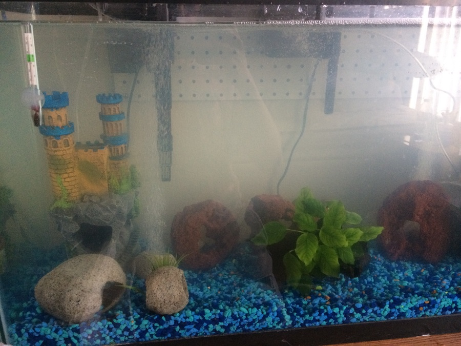 Aquarium water got cloudy and fish died my aquarium club for Cloudy water in new fish tank
