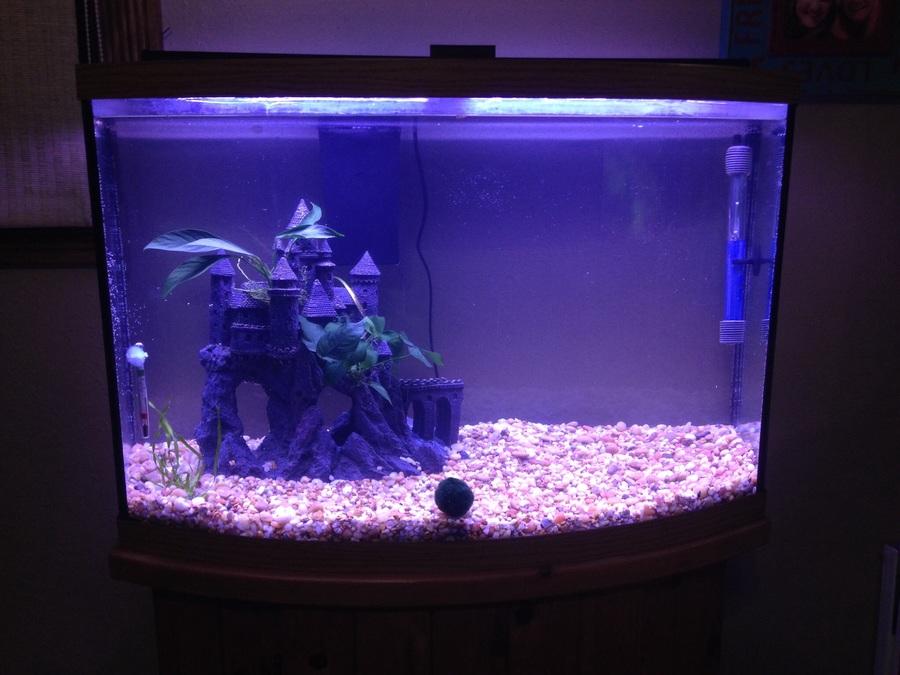 Stocking a 30 gallon bow front my aquarium club for 10 gallon fish tank stocking ideas