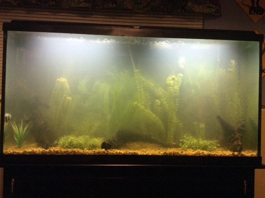 55 gallon freshwater stocking help i really need some for 55 gallon fish tank setup