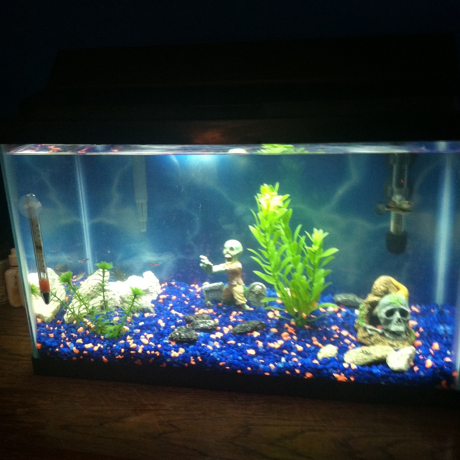 Pics of my tropical fish and tank my aquarium club for My fish tank water is cloudy