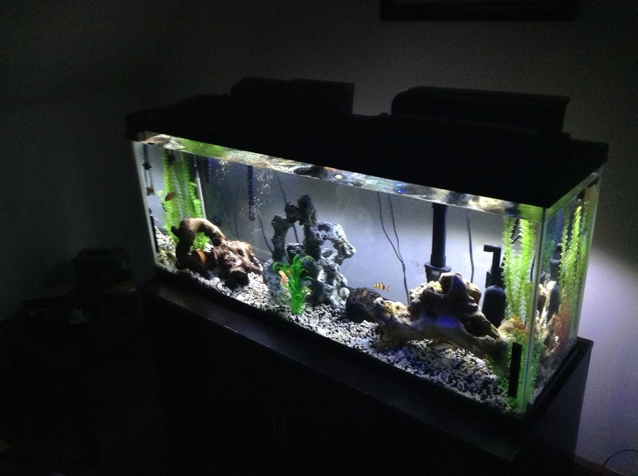 I cannot get my african cichlid tank nitrate levels below for High nitrite in fish tank