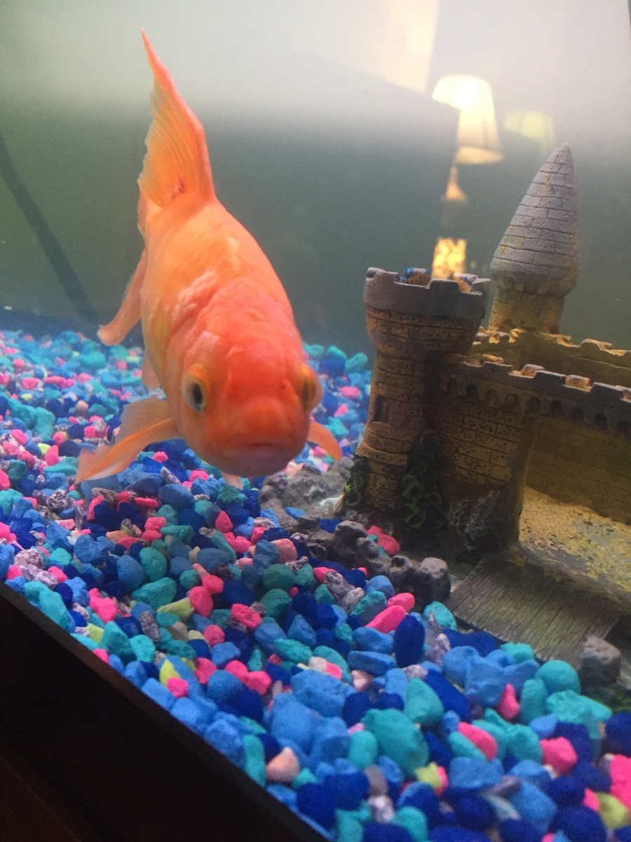 Fish aquarium red spots - He Was Doing Better But Today He Had These Red Spots With White Spots Any Advice Would Be Greatly Apprecited