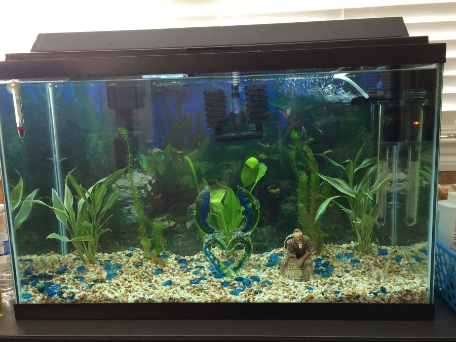 Week 2 Day 2 Of The Aquarium Cycle For My 29 Gallon I
