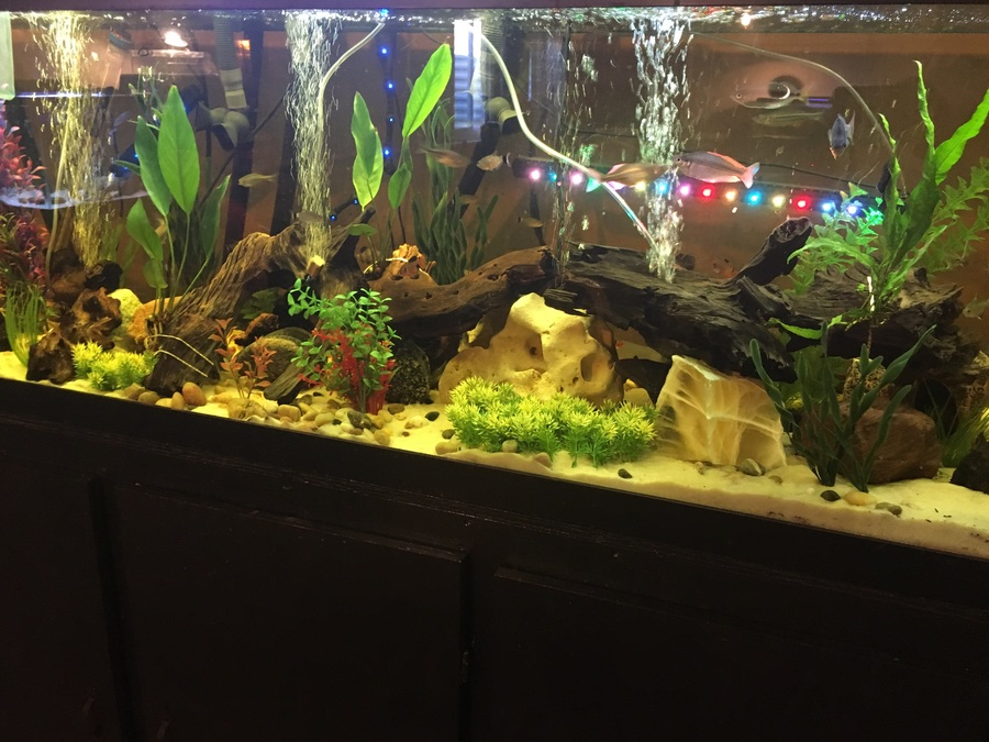 high nitrates and losing fish my aquarium club