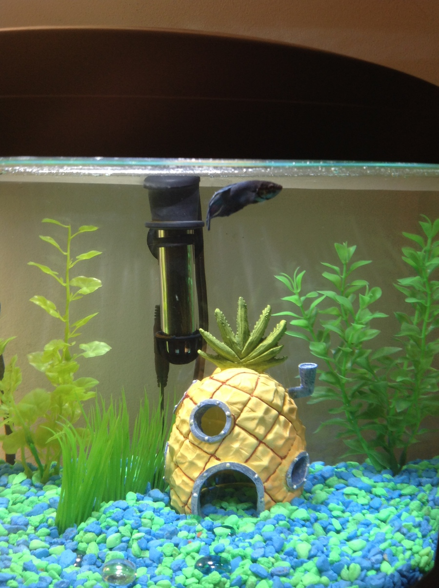 Whats wrong with my betta my aquarium club for Why is my fish tank so cloudy