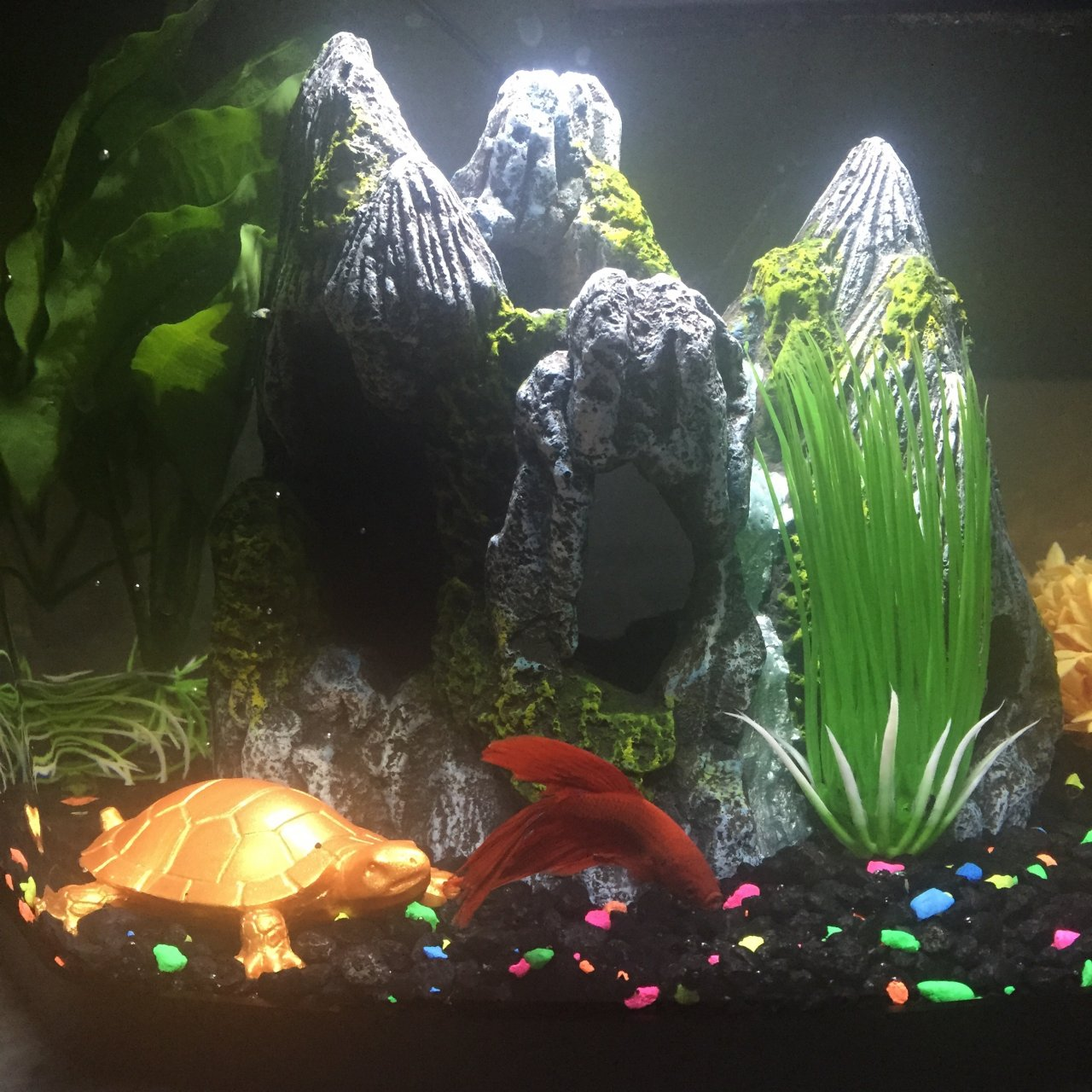 Fish for uncycled tank - I Heard That 25 Water Changes Every Other Day Might Help But I M Not 100 Sure I M Not Gonna Add Any Other Fish Anytime Soon Please Help