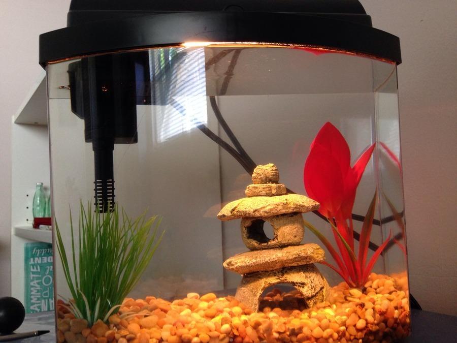 My fish dislikes the light aqueon tank problem for Multiple betta fish tank