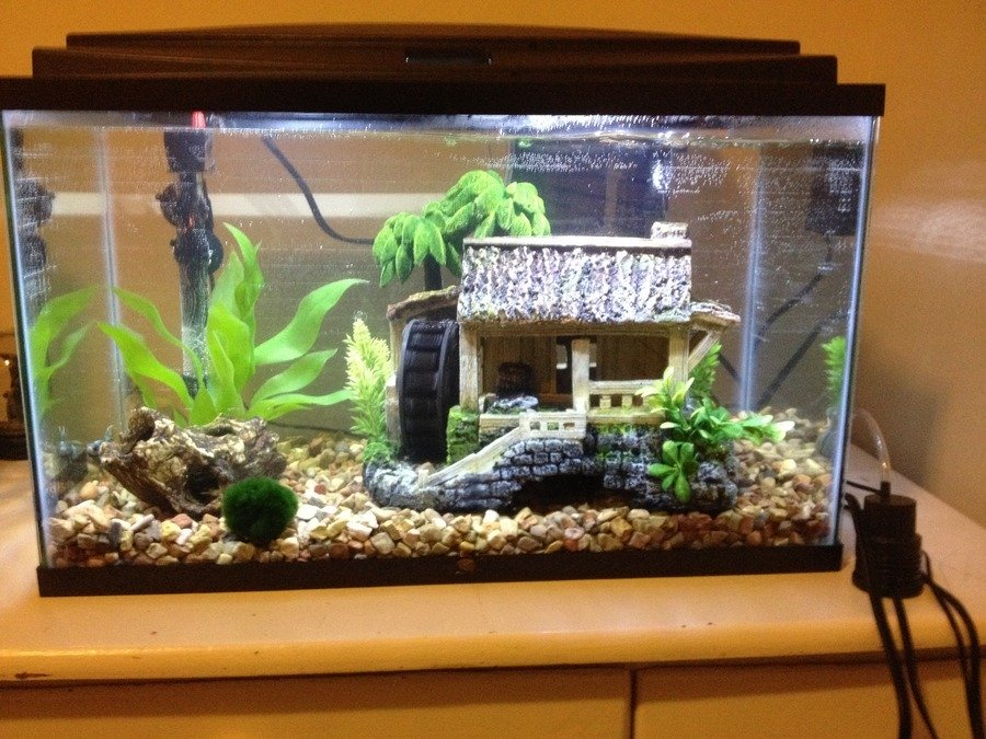10 gallon tank with male betta african dwarf frog black for 3 gallon fish tank for betta