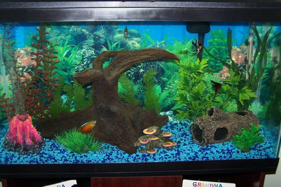 fish tank deutsch