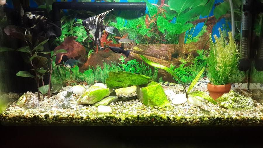 What do you guys think about my small fish tank its full for Fish tank full movie