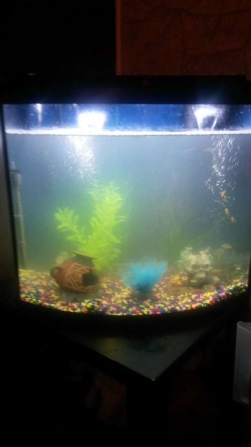 Help cloudy water and high nitrite levels my aquarium club for Nitrite in fish tank