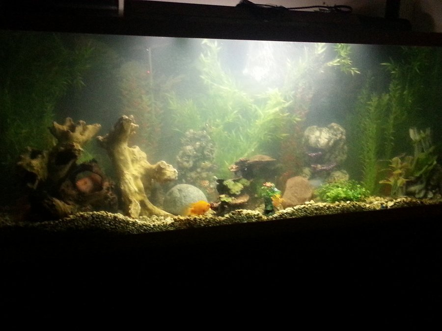 My 250 gallon tank has become cloudy and my parrot fish for My fish tank water is cloudy