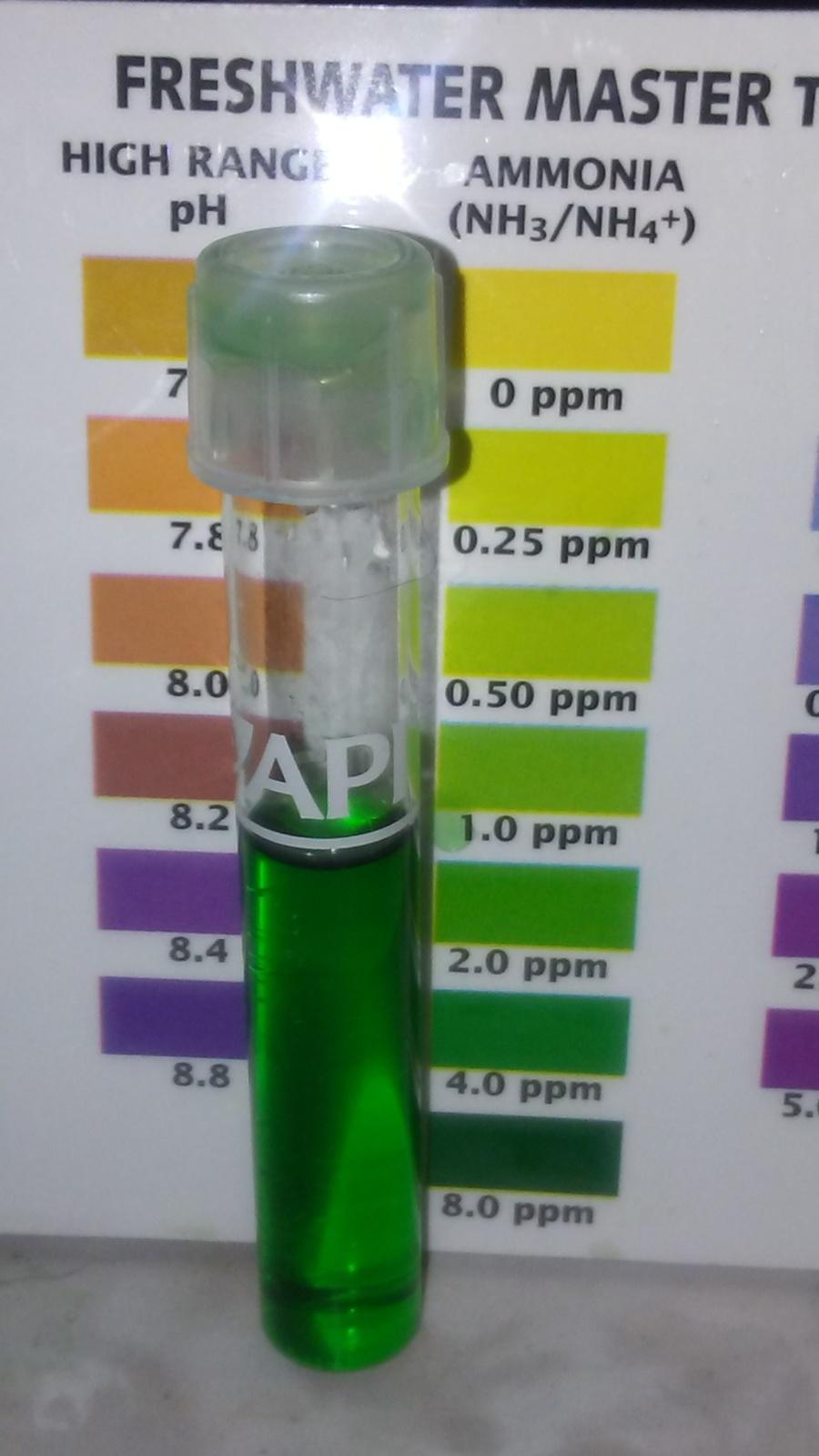 Ammonia my aquarium club for Ammonia in fish tank