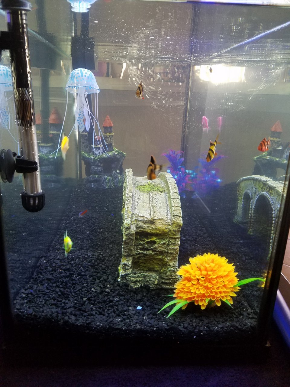 Freshwater fish tank has cloudy water - Now Test Strip Still Says Hard Water And The Nitrate Is At Caution From Front View Looks Ok From Side It Looks Cloudy Have A Hard Time Showing In