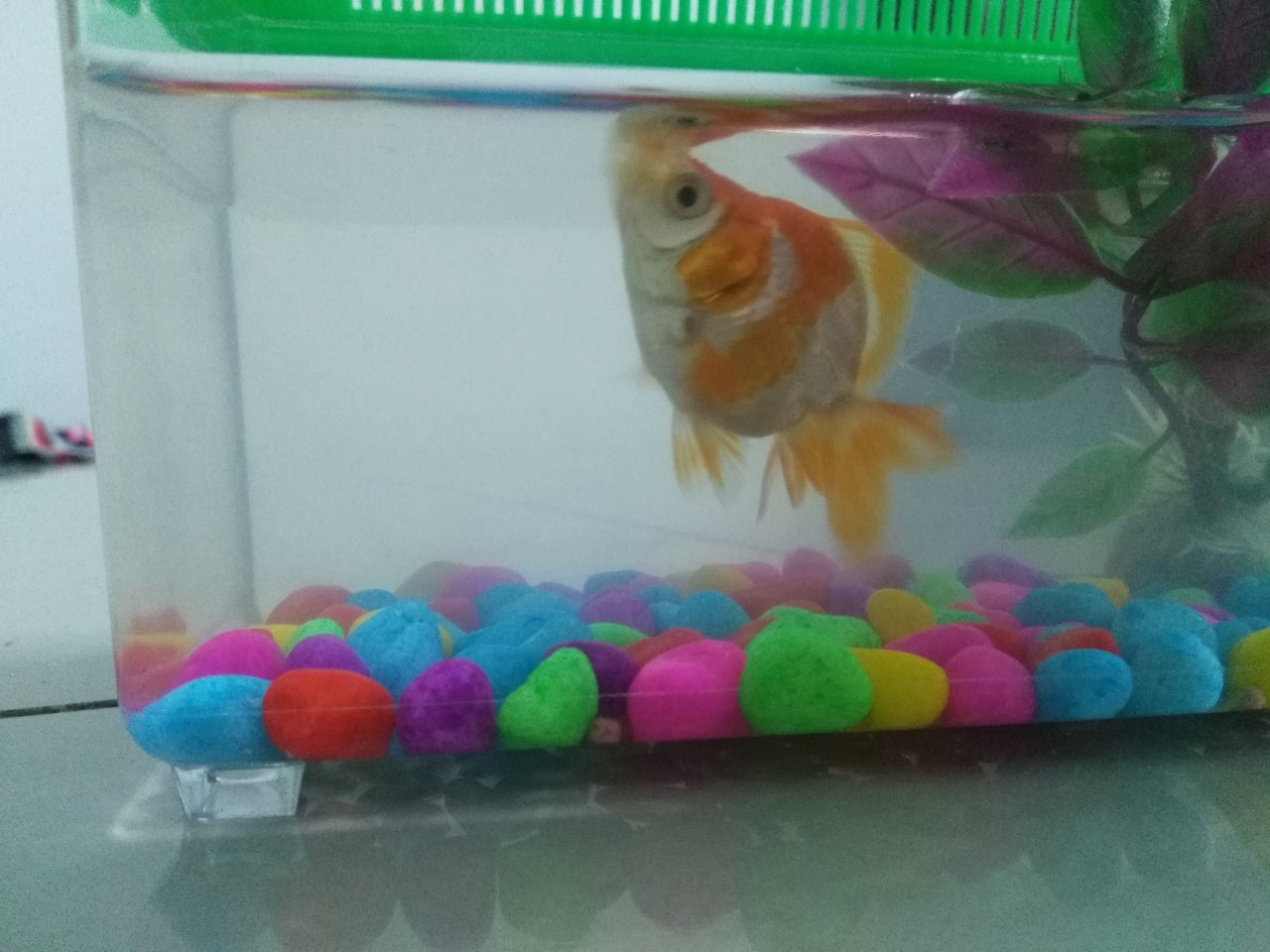 Fish in tank swimming at top - I Just Bought A Gold Fish 3 Days Ago And It Keeps Swimming On Top Of The Tank What Should I Do Im Worry