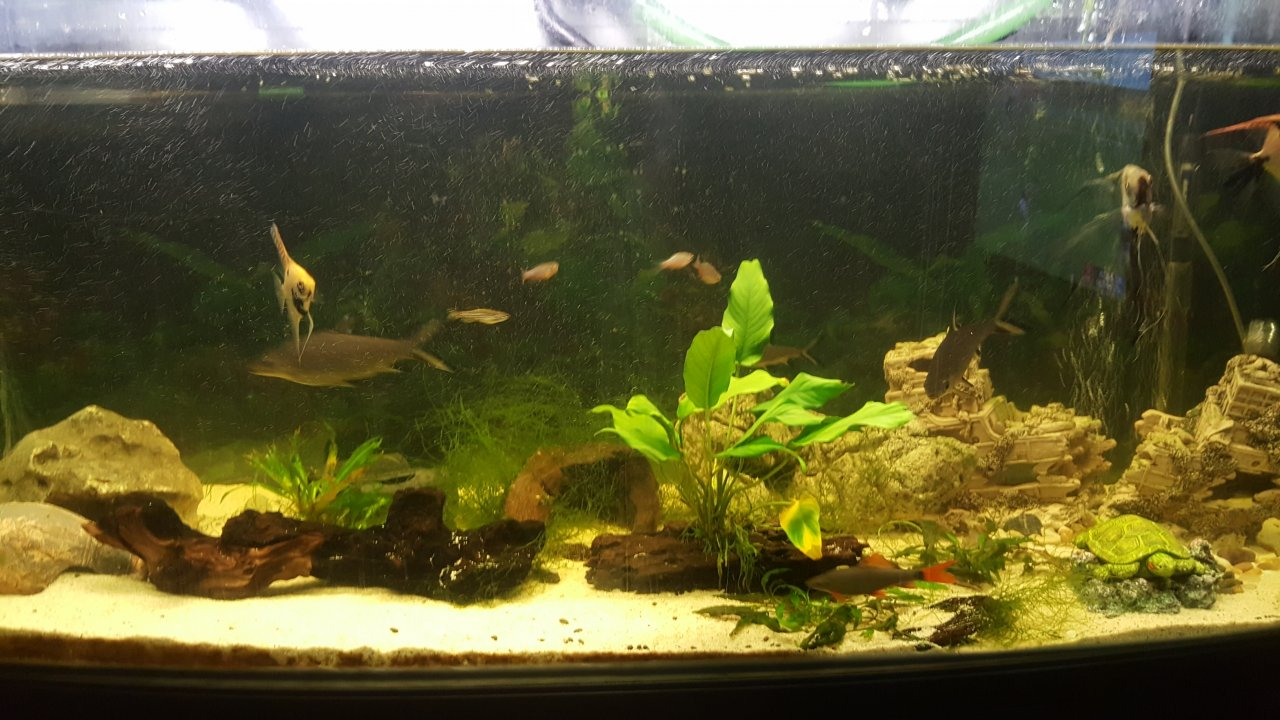 Freshwater aquarium fish are dying - Do I Need To Add Anything To The Water Or Maybe My Fish Are Eating Destroying Them Anyway Any Info Would Help Cheers In Advance