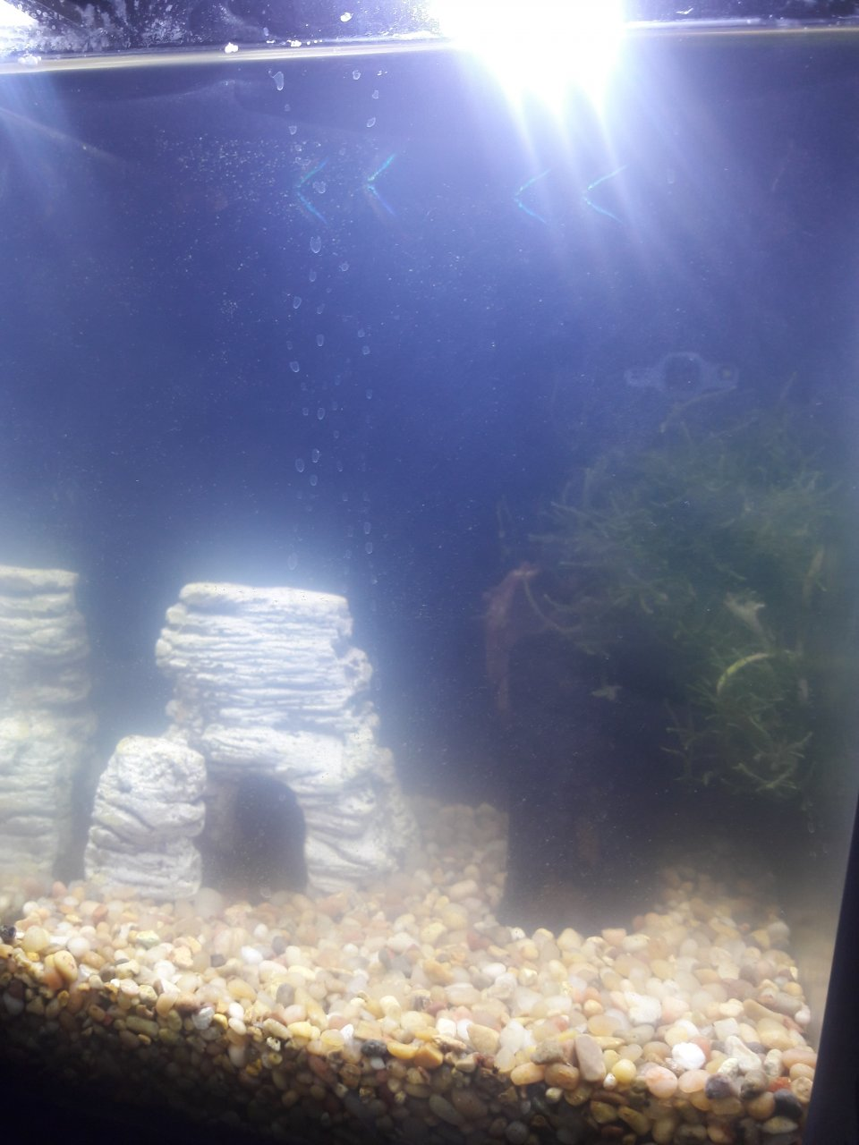 Freshwater aquarium fish gasping for air -  The Water Was Very Cloudy And The Fish Were At The Top Gasping For Air I Only Have Done One Big Water Change 50 And Gravel Clean About 2 Weeks Ago