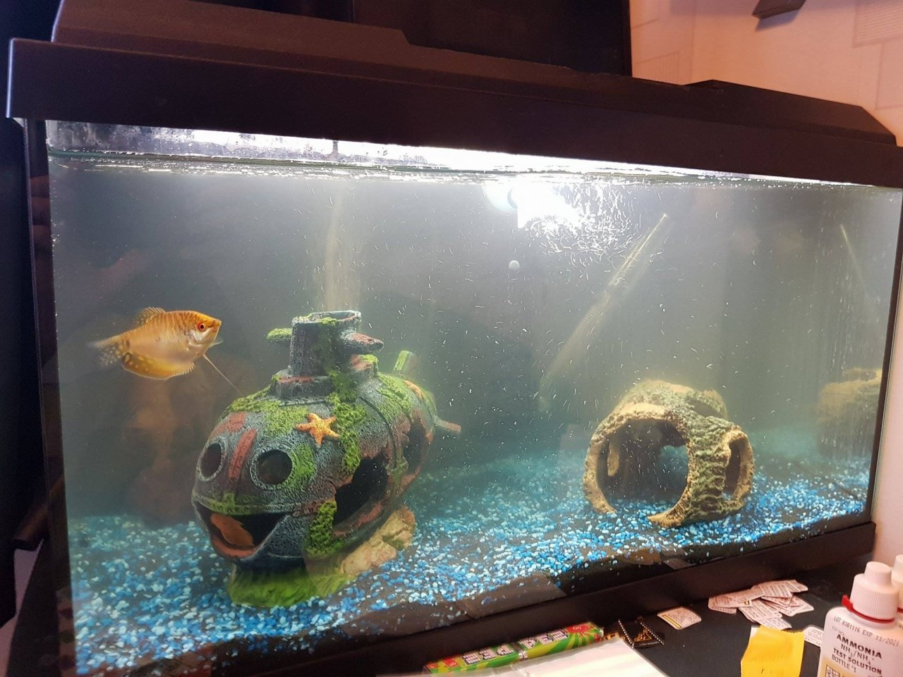 Freshwater aquarium fish help - Hello I Need Urgent Help I Had A Freshwater Aquarium That Was 22l And Had No Major Problems Decided To Upgrade As Was Getting Overcrowded And Have Had