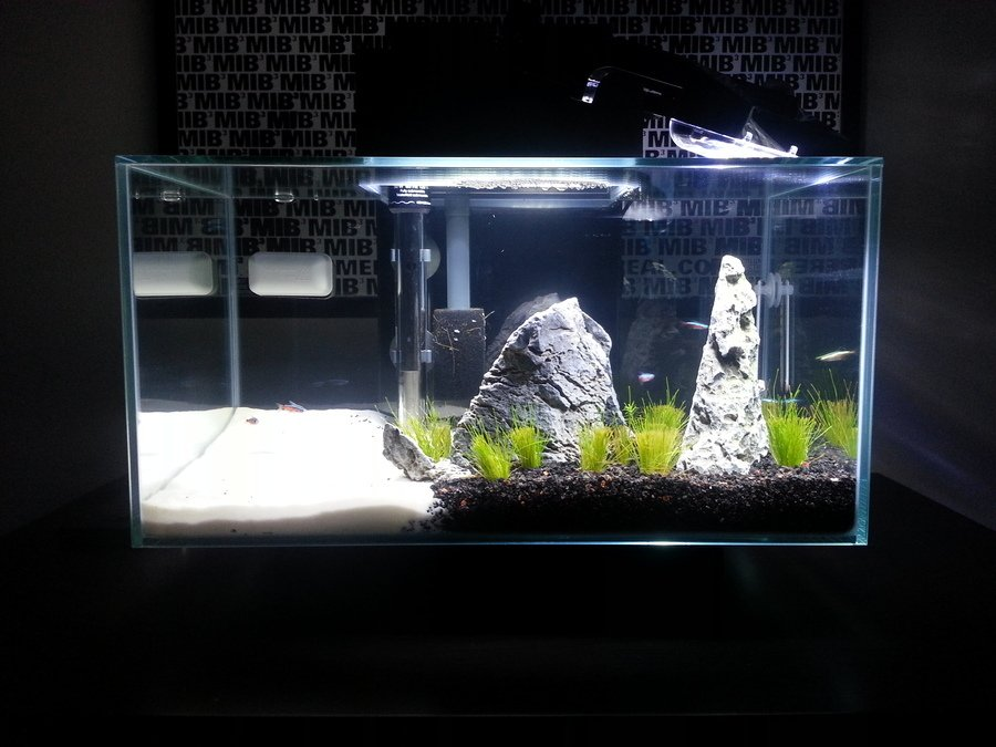 Nitrite too high even after water changes for several days for High nitrite in fish tank