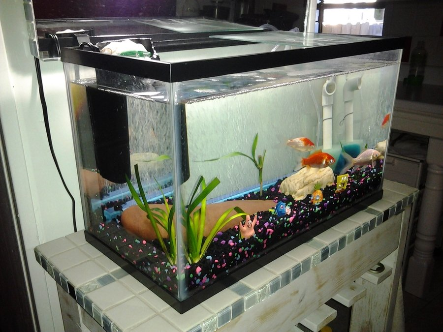 Yellow tank turbulence needs substrate my aquarium club for Cloudy fish tank water in established tank