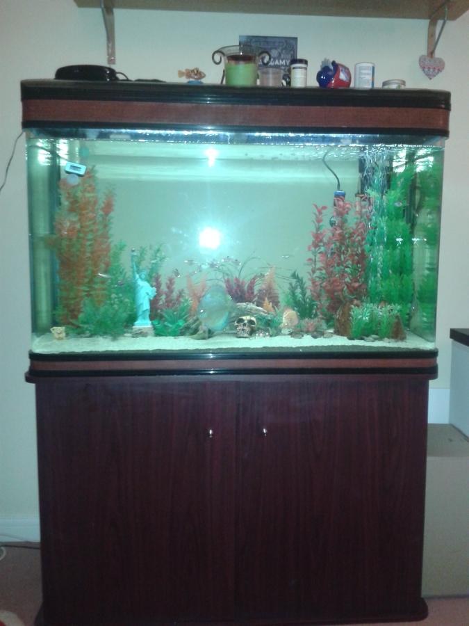 Boyu fish tank question my aquarium club for Fish tank riddle