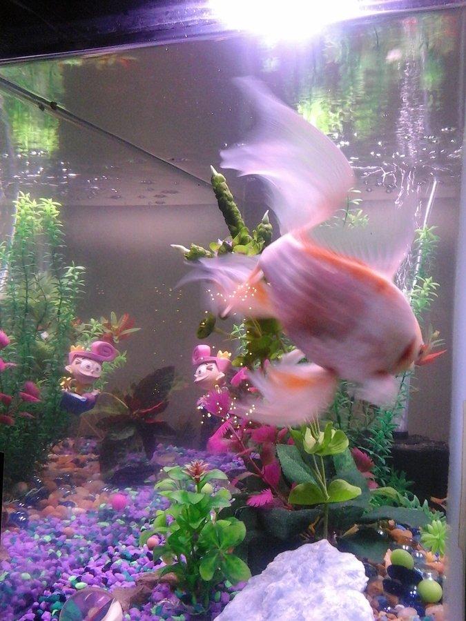 Glue rocks safe my aquarium club for Fish tank glue
