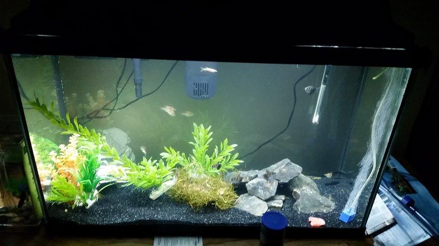 Possible bacterial mishap my aquarium club for Bacterial bloom fish tank