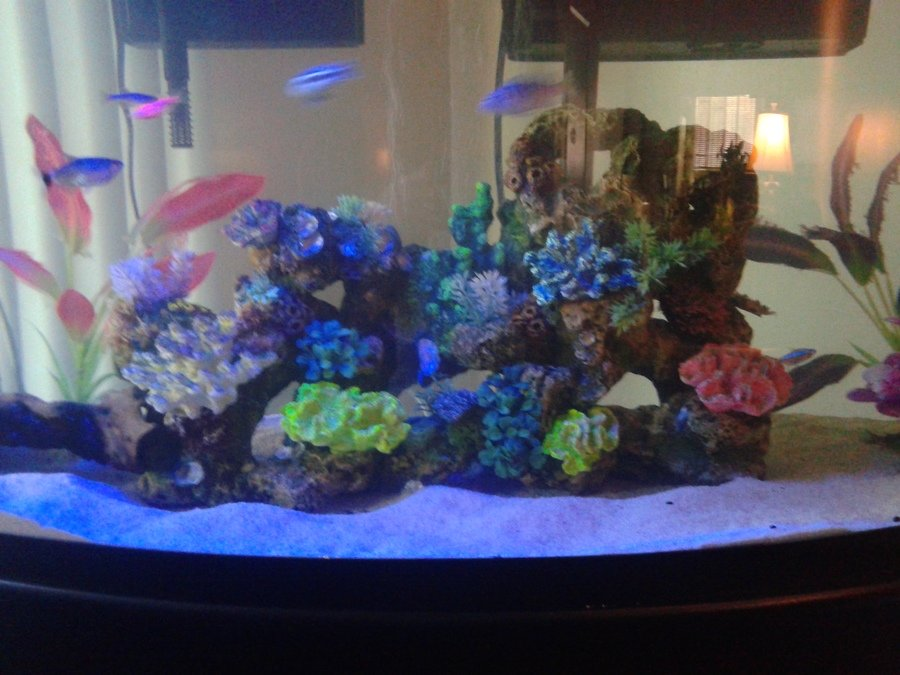 Should you remove main ornament from tank to clean it i for How often should you clean a fish tank