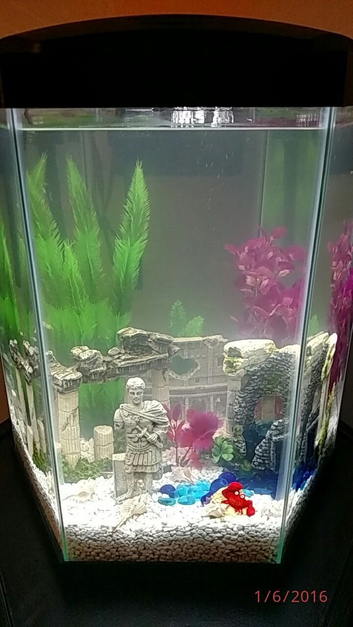 Freshwater aquarium fish no heater -  White Gravel And No Fish Yet I M Going To Add A Few Flakes To See If Things Change By The Weekend It S Wednesday Evening Now Here Are 2 Photos