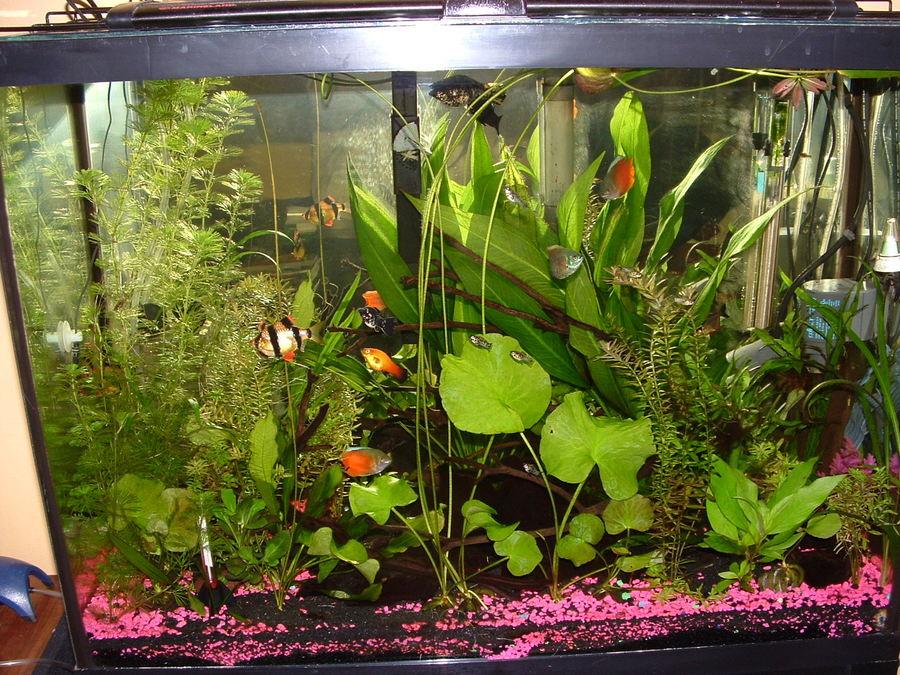 Can Aquarium Plants Grow Under Led Light My Aquarium Club