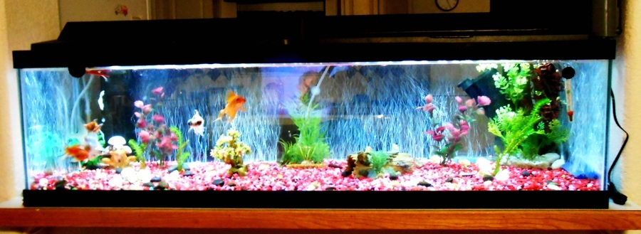 how to clean the bottom of my fish tank