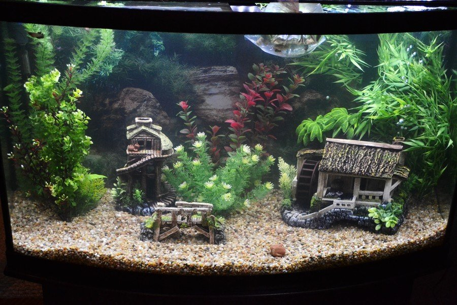 1 month old 46 gallon bow tank my aquarium club for How many fish can be in a 20 gallon tank