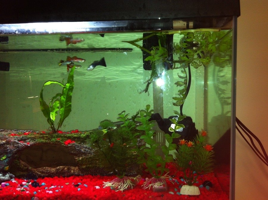 Guppies my aquarium club for How many fish can be in a 20 gallon tank