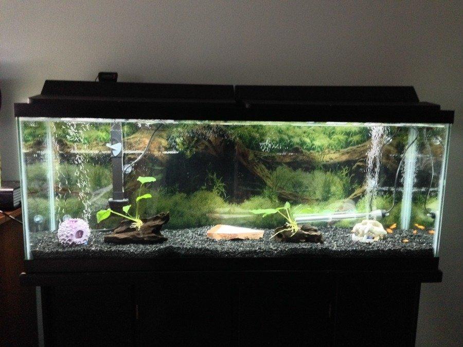 New 50g Tank My Aquarium Club