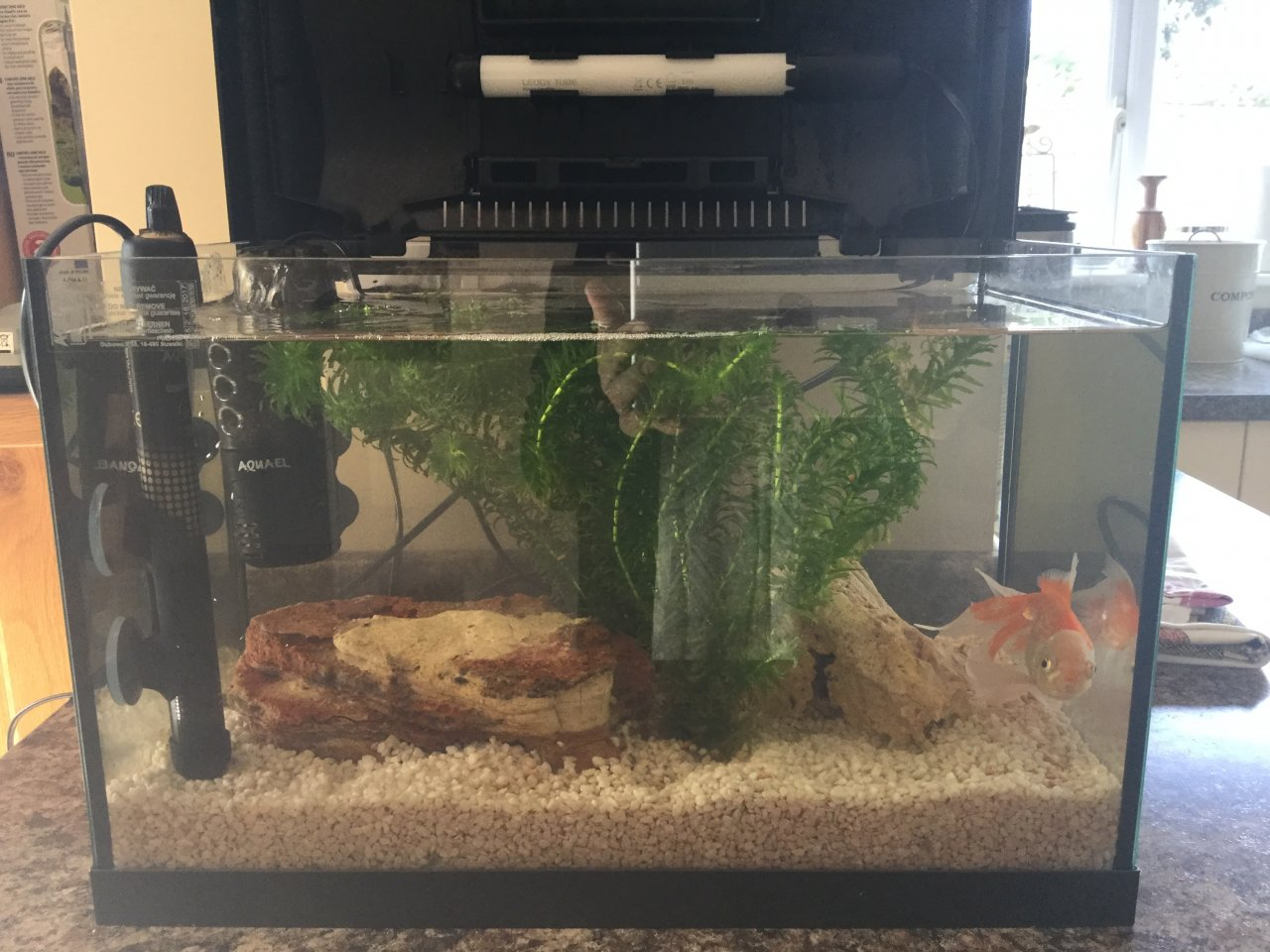 Freshwater fish no filter - I Have One Fish In A 25 Ltr Tank With A Water Filter Pump Thing Fish Has N