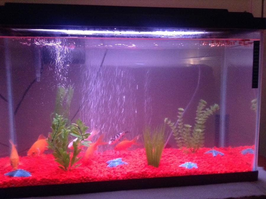 Day three of new tank high ammonia levels my aquarium club for Ammonia levels in fish tank