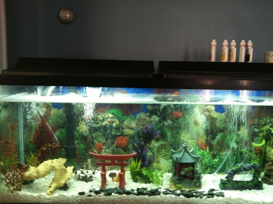 New 55 Tank Setup Fishless Cycle My Aquarium Club