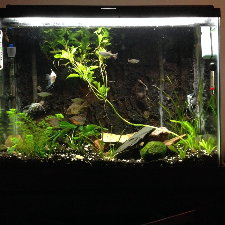High nitrite nitrate levels in planted tank help my for Nitrite in fish tank
