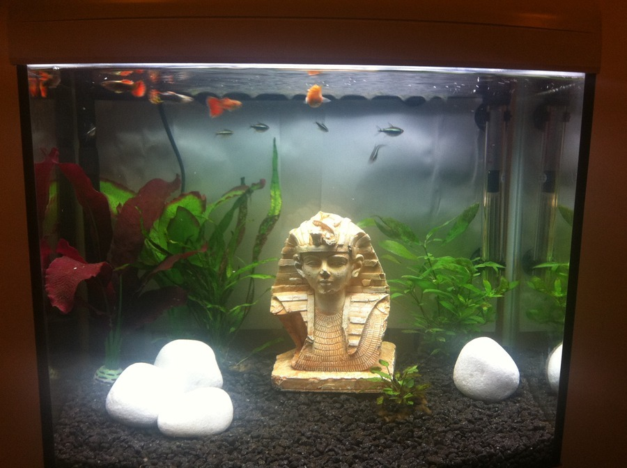 How many fish can be kept in a 65l tank any advice would for How many fish can be in a 20 gallon tank
