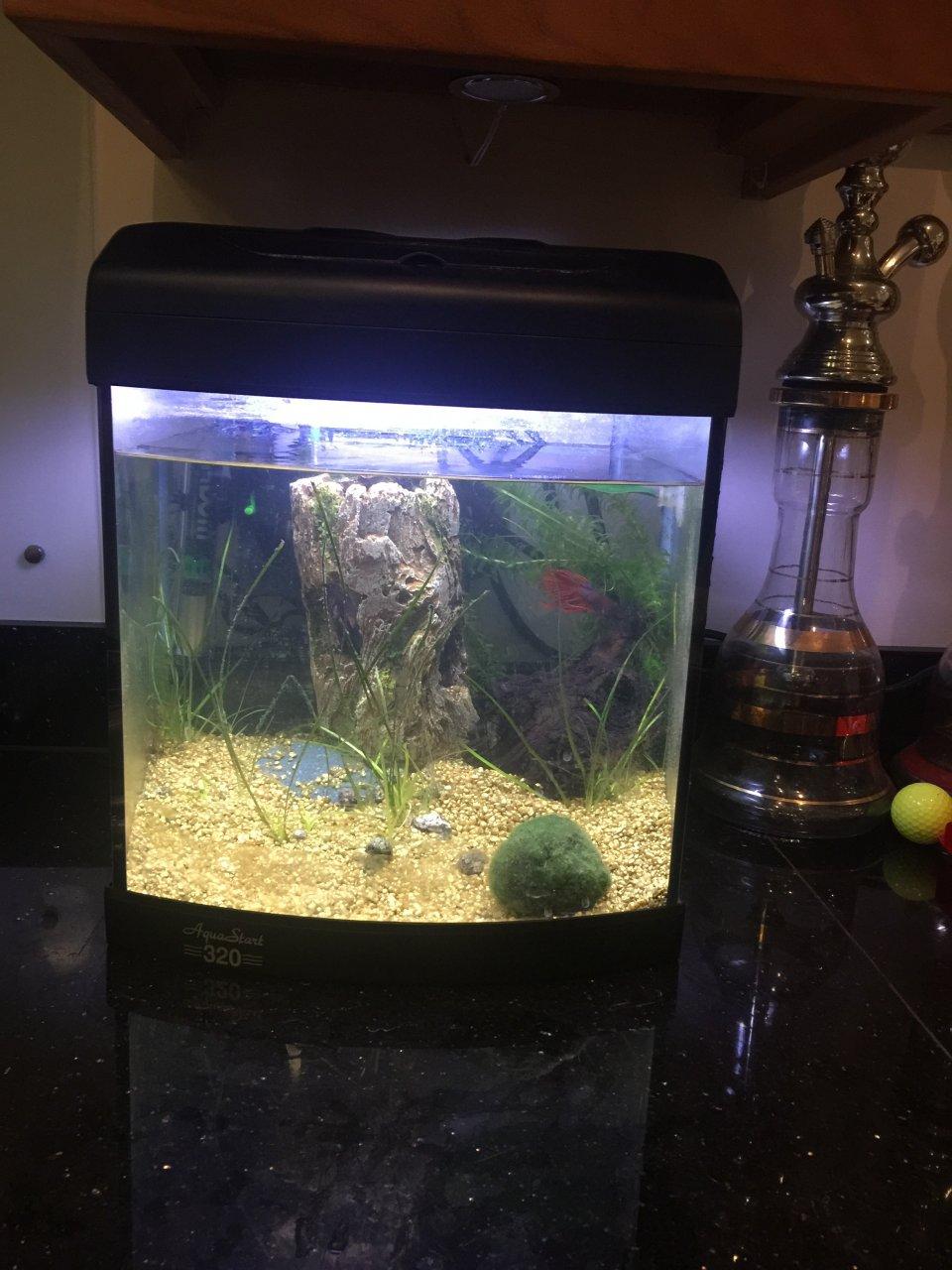 Freshwater aquarium fish high ph - Nitrite Very High 1 Betta Fish