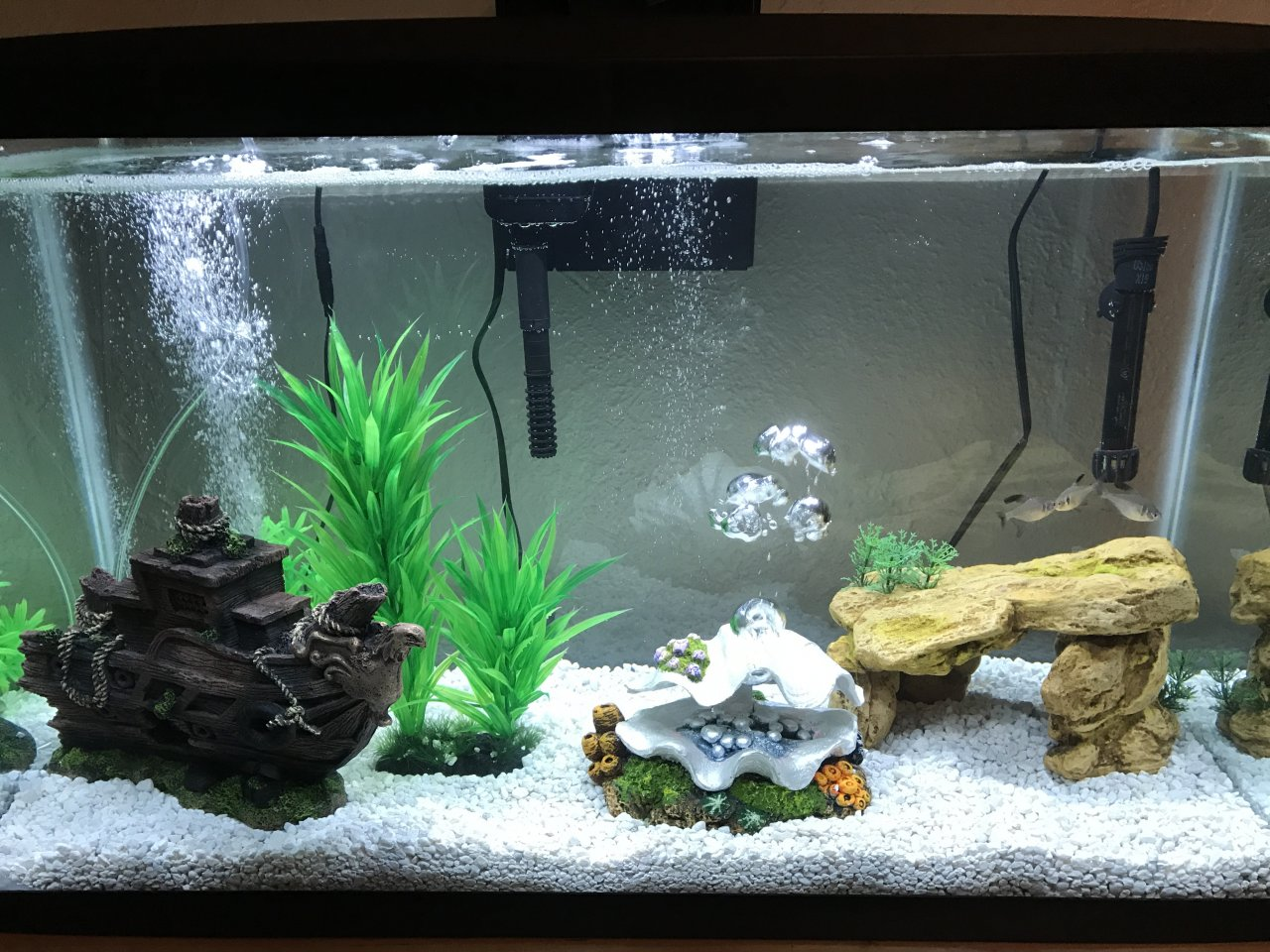 Freshwater aquarium fish not eating - Only The Largest Fish Got One Of The Worms And The Female Will Get A Flake Occasionally The Pellets Are Completely Ignored Any Advise Will Be Greatly