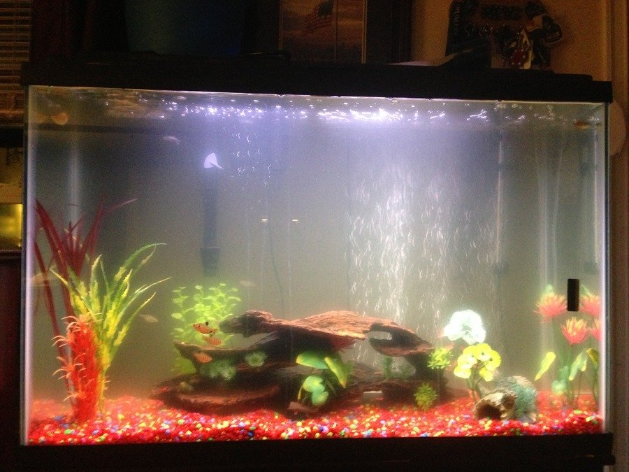 Nitrite And Nitrate Levels My Aquarium Club