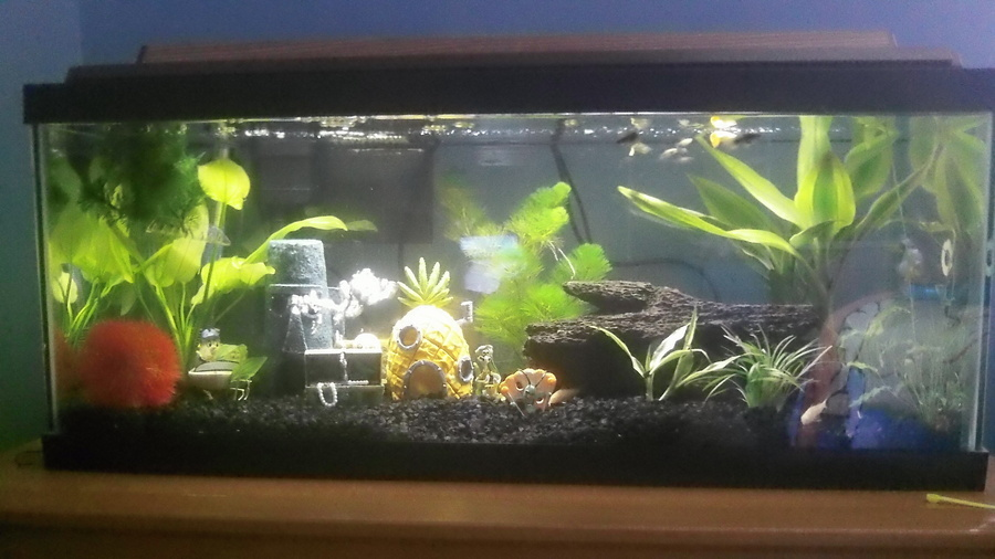 reviews on eco planted substrate my aquarium club