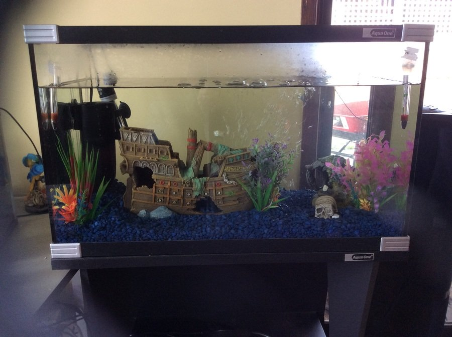 Need help with ammonia off the chart high fishless tank for Ammonia in fish tank